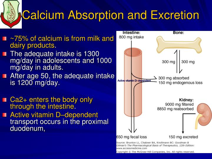 Calcium Absorption and Excretion