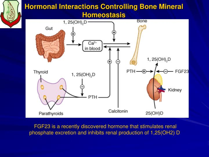 Hormonal Interactions Controlling Bone Mineral Homeostasis