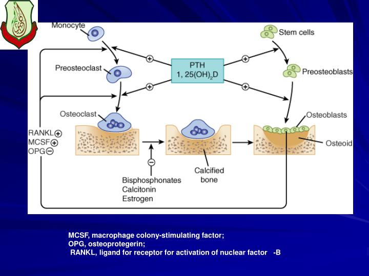 MCSF, macrophage colony-stimulating factor;