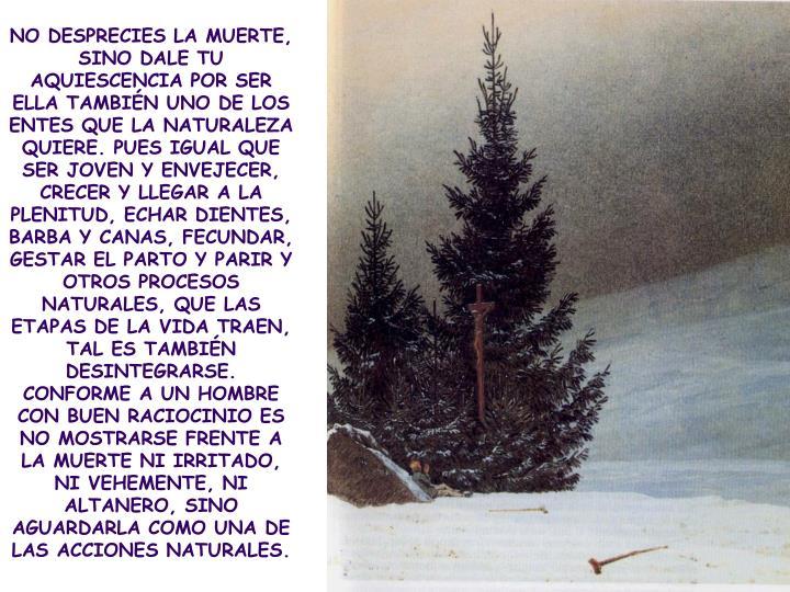 NO DESPRECIES LA MUERTE, SINO DALE TU AQUIESCENCIA POR SER ELLA TAMBIÉN UNO DE LOS ENTES QUE LA NATURALEZA QUIERE. PUES IGUAL QUE SER JOVEN Y ENVEJECER, CRECER Y LLEGAR A LA PLENITUD, ECHAR DIENTES, BARBA Y CANAS, FECUNDAR, GESTAR EL PARTO Y PARIR Y OTROS PROCESOS NATURALES, QUE LAS ETAPAS DE LA VIDA TRAEN, TAL ES TAMBIÉN DESINTEGRARSE. CONFORME A UN HOMBRE CON BUEN RACIOCINIO ES NO MOSTRARSE FRENTE A LA MUERTE NI IRRITADO, NI VEHEMENTE, NI ALTANERO, SINO AGUARDARLA COMO UNA DE LAS ACCIONES NATURALES.
