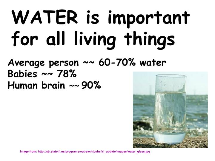 WATER is important for all living things