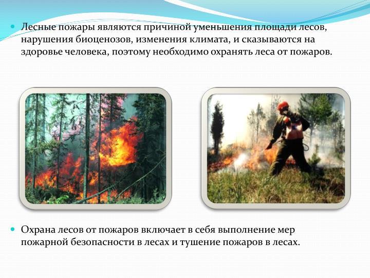 Лесные пожары являются причиной уменьшения площади лесов,  нарушения биоценозов, изменения климата, и сказываются на здоровье человека, поэтому необходимо охранять леса от пожаров.