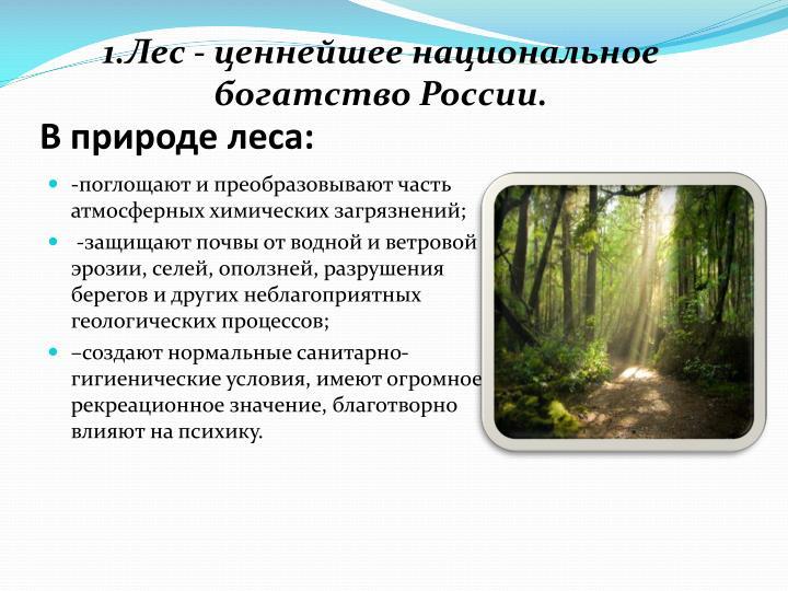 1.Лес - ценнейшее национальное богатство России.