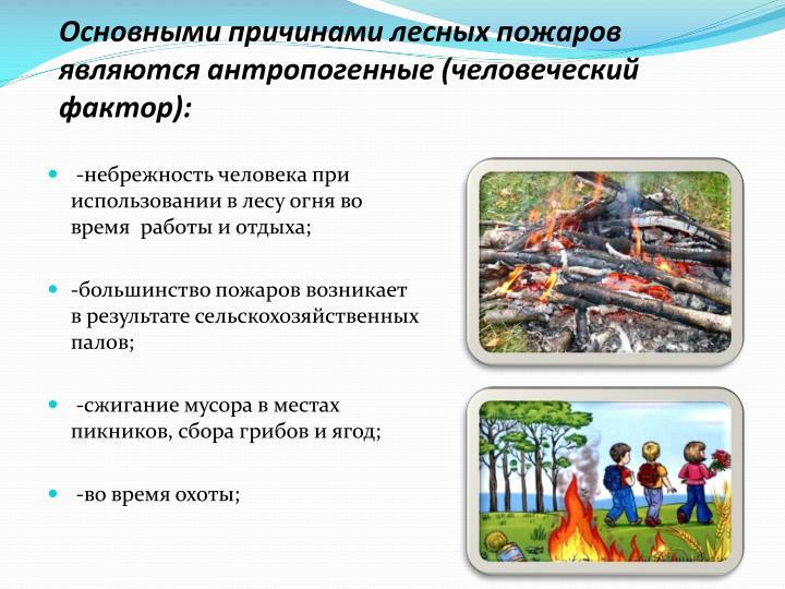 Основными причинами лесных пожаров являются антропогенные (человеческий фактор):