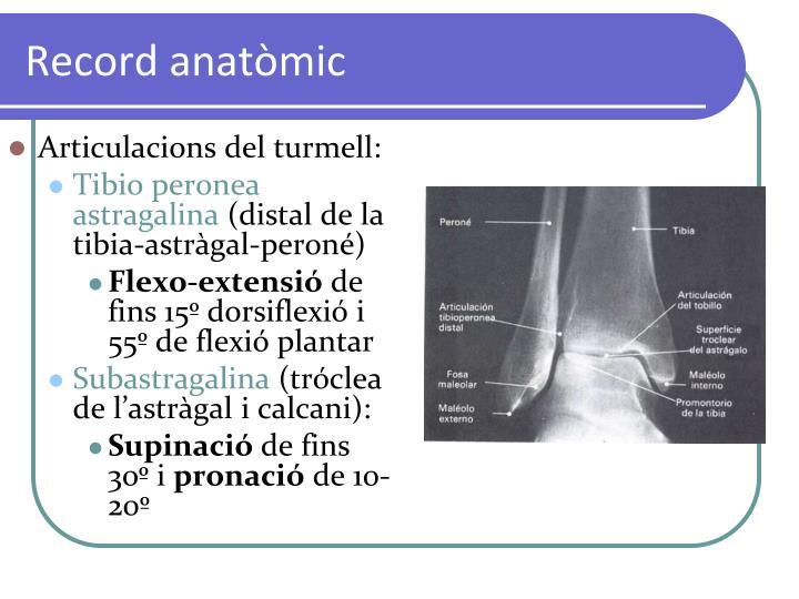Record anatòmic