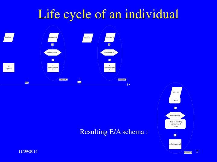 Life cycle of an individual