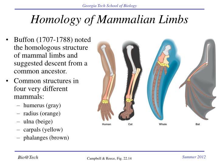 Homology of Mammalian Limbs