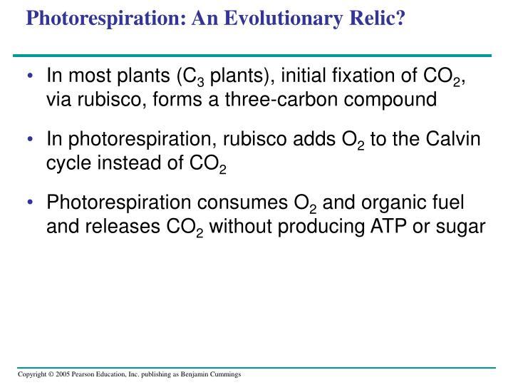Photorespiration: An Evolutionary Relic?