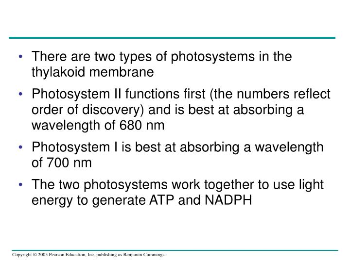 There are two types of photosystems in the thylakoid membrane