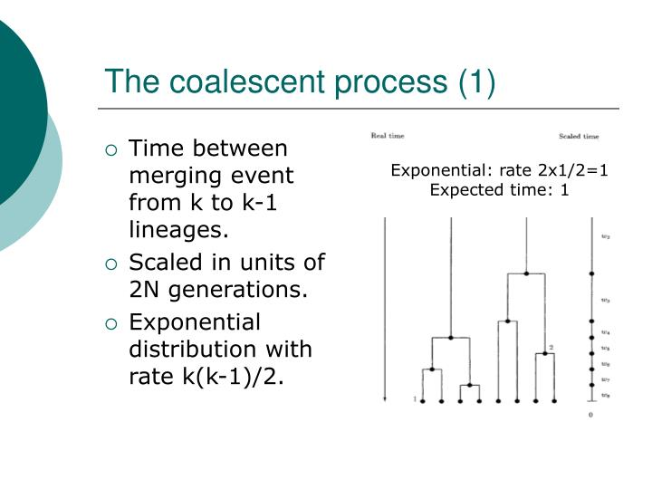 The coalescent process (1)