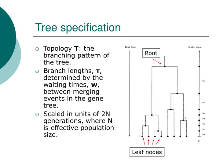 Tree specification