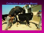 collection on a live mount1