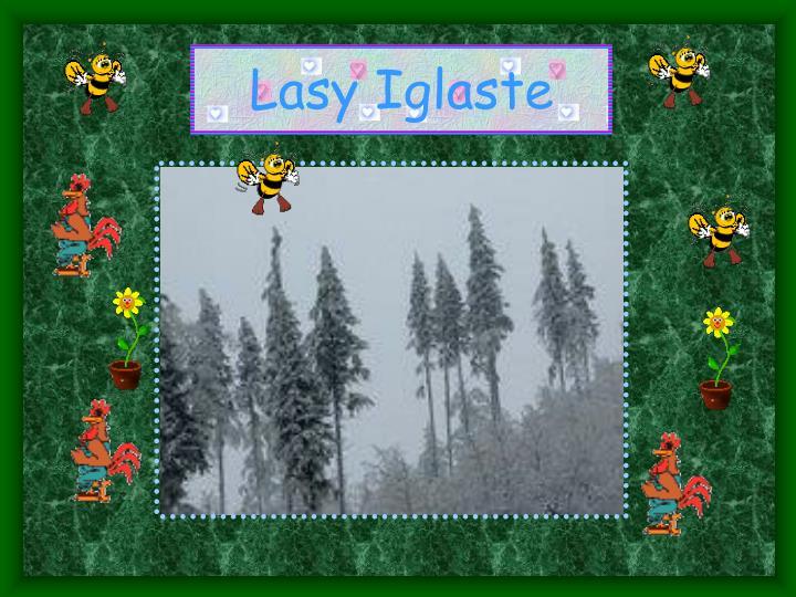 Lasy Iglaste
