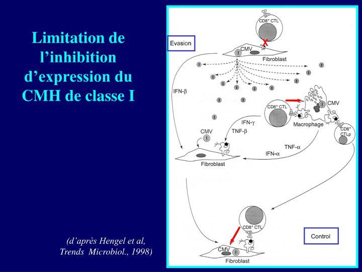 Limitation de l'inhibition d'expression du CMH de classe I
