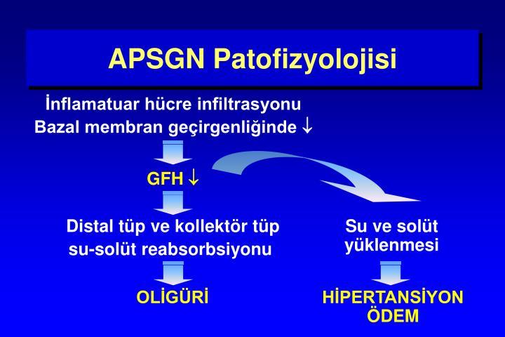 APSGN Patofizyolojisi