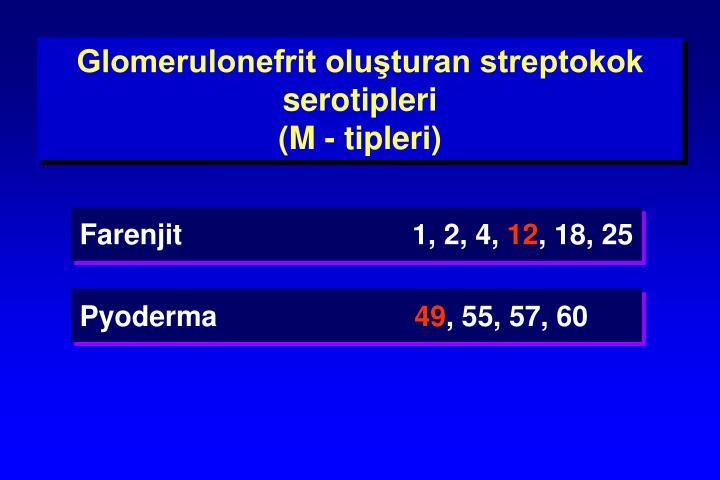 Glomerulonefrit oluşturan streptokok serotipleri