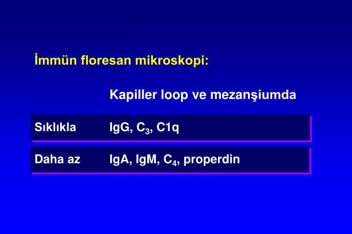 İmmün floresan mikroskopi:
