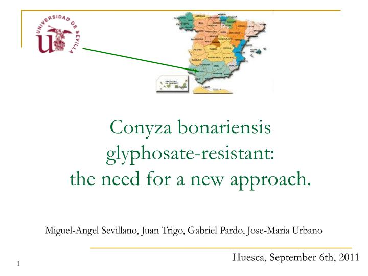 conyza bonariensis glyphosate resistant the need for a new approach n.