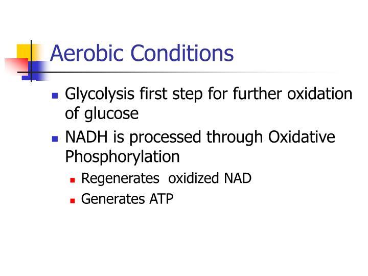 Aerobic Conditions