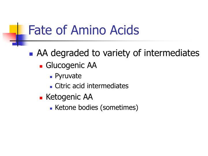 Fate of Amino Acids