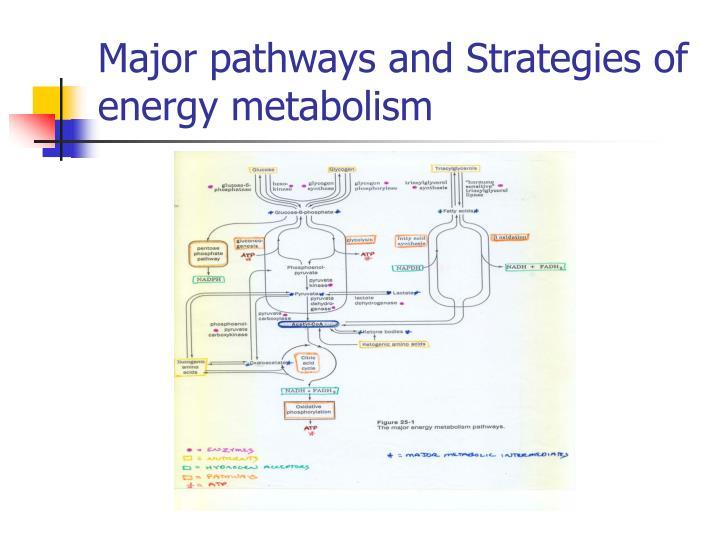 Major pathways and Strategies of energy metabolism