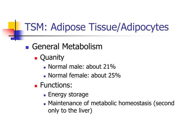 TSM: Adipose Tissue/Adipocytes