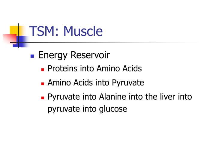 TSM: Muscle