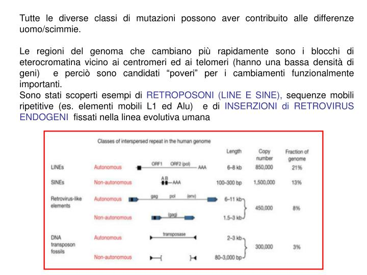 Tutte le diverse classi di mutazioni possono aver contribuito alle differenze uomo/scimmie.
