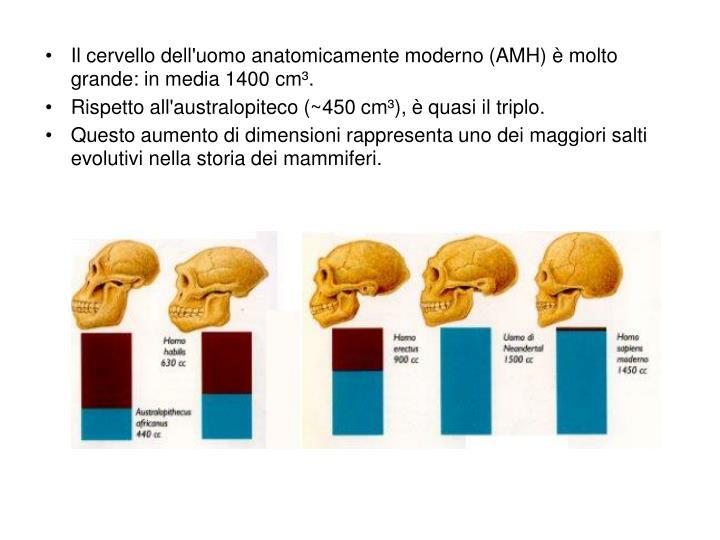 Il cervello dell'uomo anatomicamente moderno (AMH) è molto grande: in media 1400 cm³.