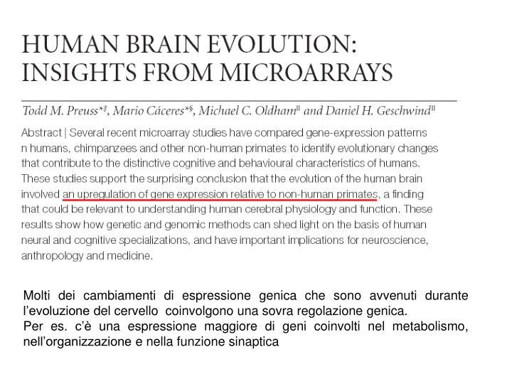 Molti dei cambiamenti di espressione genica che sono avvenuti durante l'evoluzione del cervello  coinvolgono una sovra regolazione genica.