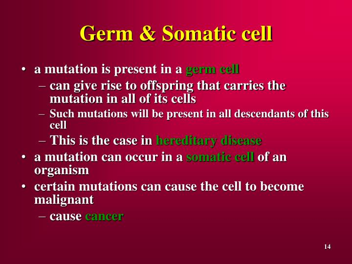 Germ & Somatic cell