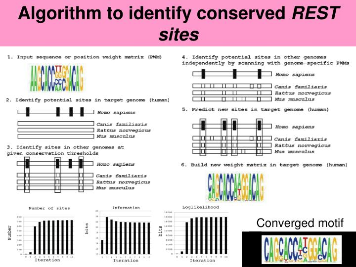 Algorithm to identify conserved