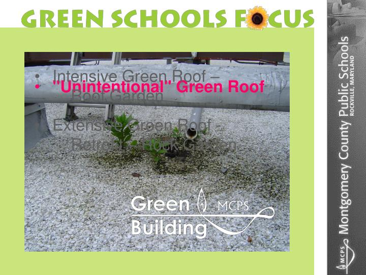 """""""Unintentional"""" Green Roof"""