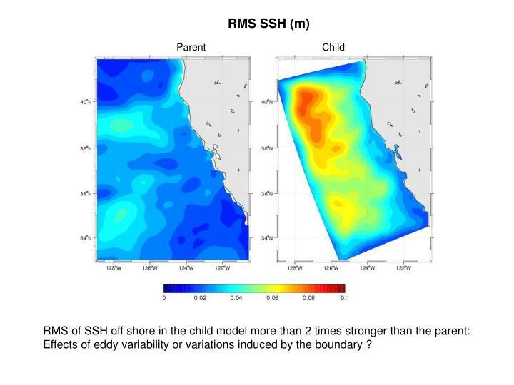 RMS SSH (m)