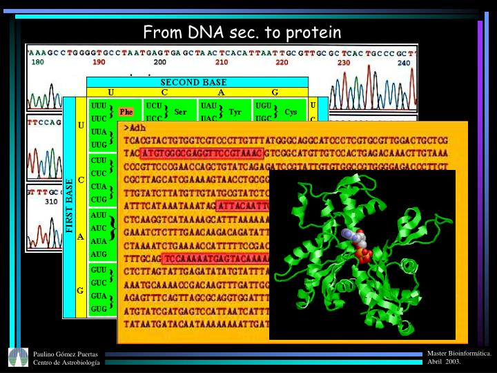 From DNA sec. to protein