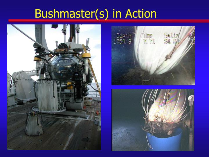 Bushmaster(s) in Action