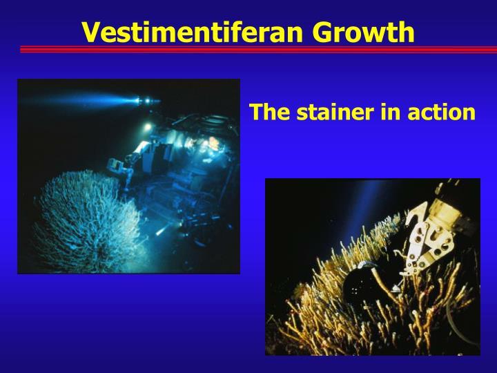 Vestimentiferan Growth
