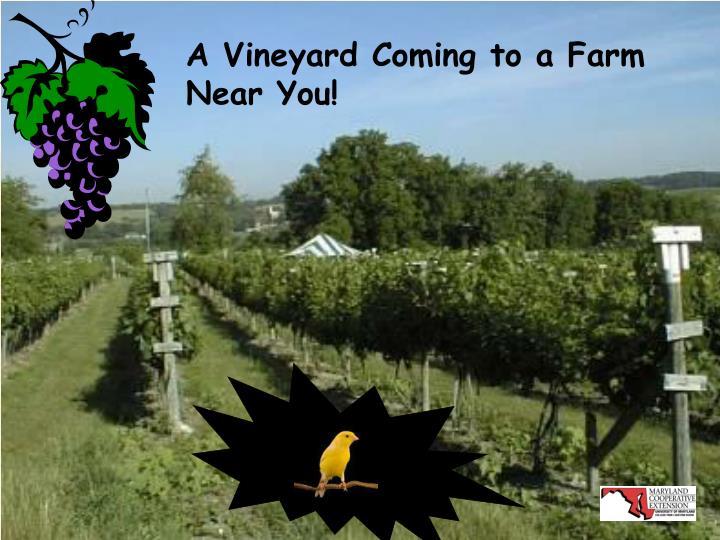 A Vineyard Coming to a Farm Near You!