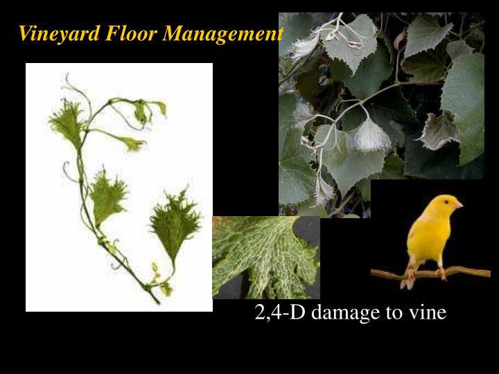 Vineyard Floor Management