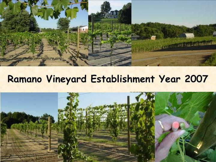 Ramano Vineyard Establishment Year 2007