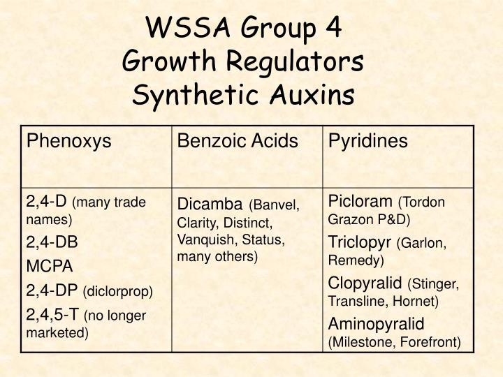 WSSA Group 4