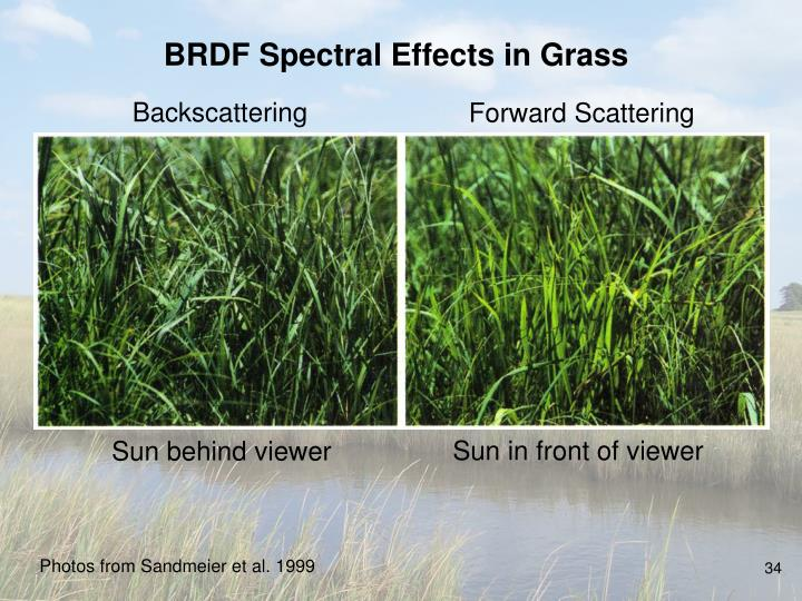 BRDF Spectral Effects in Grass