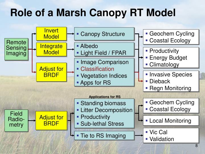 Role of a Marsh Canopy RT Model