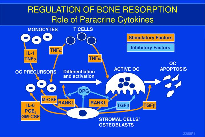 REGULATION OF BONE RESORPTION