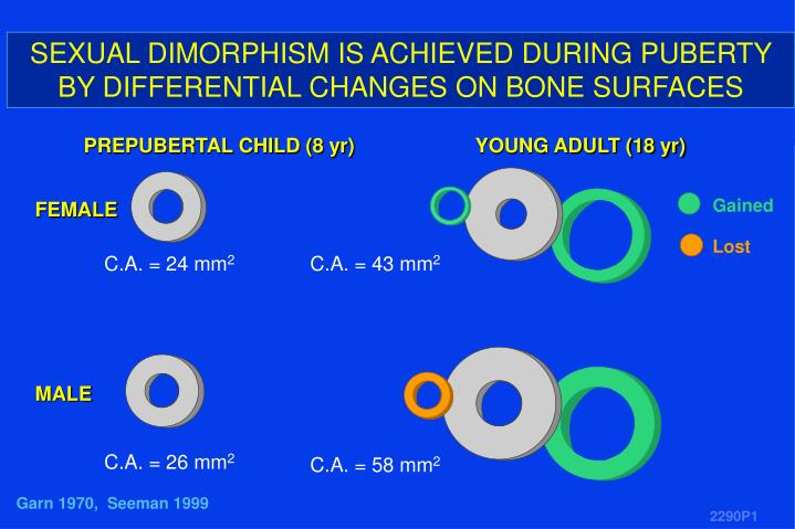SEXUAL DIMORPHISM IS ACHIEVED DURING PUBERTY BY DIFFERENTIAL CHANGES ON BONE SURFACES