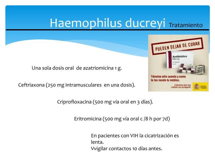 Haemophilus ducreyi