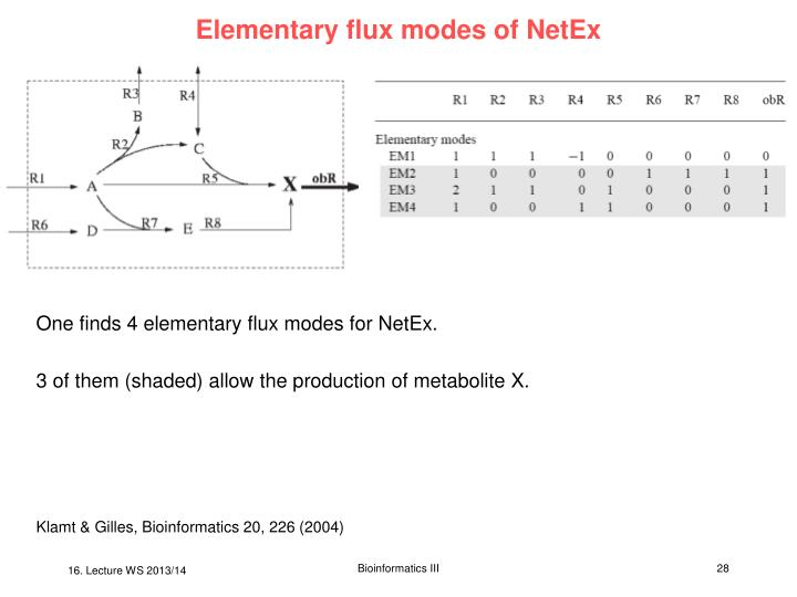 Elementary flux modes of NetEx