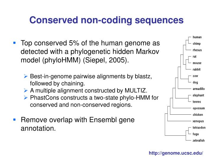 Conserved non-coding sequences