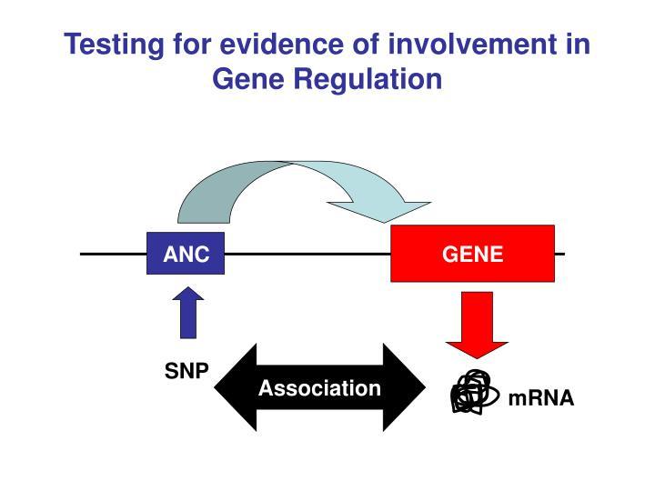 Testing for evidence of involvement in Gene Regulation
