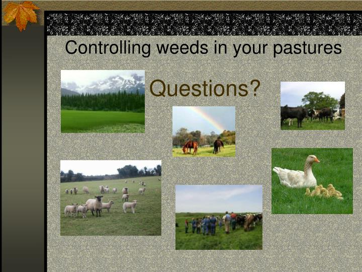 Controlling weeds in your pastures